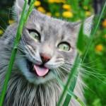 Фото: Веселый кот