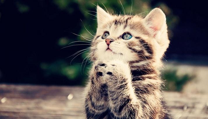 картинки котята милые