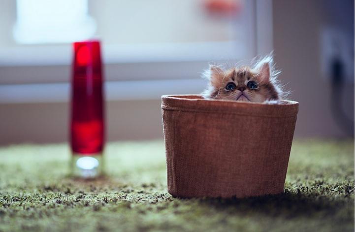 Маленький котенок по кличке дейзи