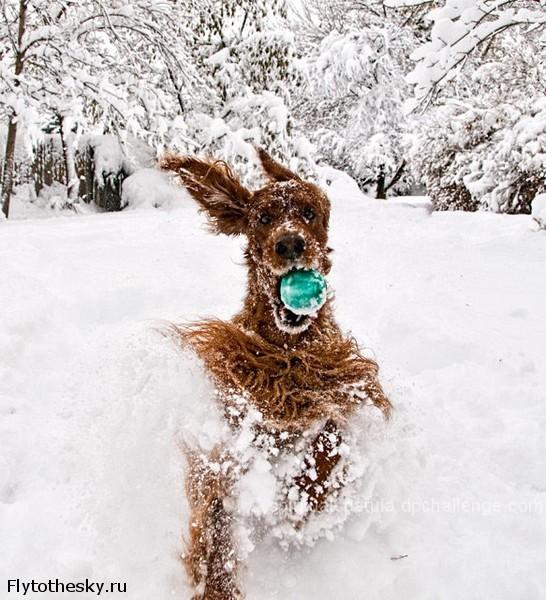 Собаки в снегу | В мире интересного