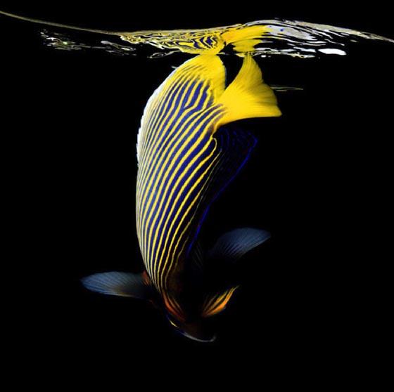 Подводный мир океана 8