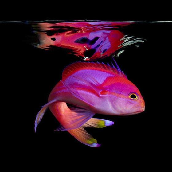 Подводный мир фото от david doubilet фото