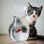 Веселые и трогательные фото из мира животных