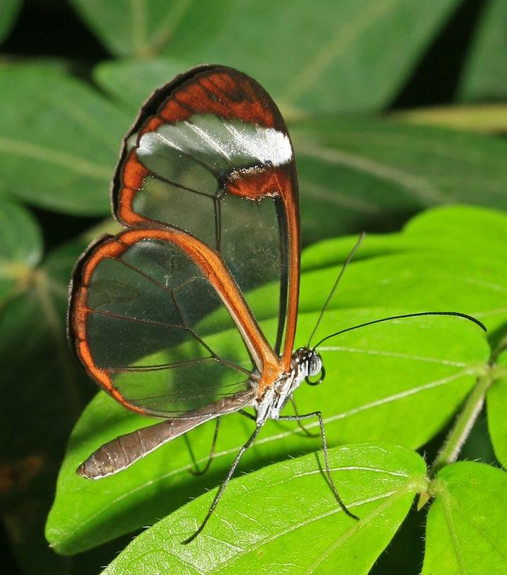 продолжили картинки с прозрачными крыльями любых