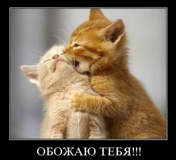 обожаю тебя. картинки