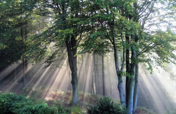 Красивые фотографии леса (33)