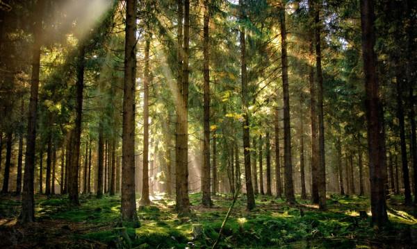 Красивые фотографии леса (30)