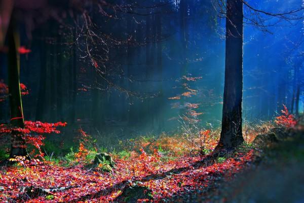 Красивые фотографии леса (32)