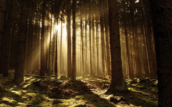 Красивые фотографии леса (31)