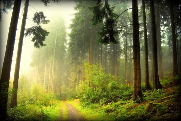 Красивые фотографии леса (20)