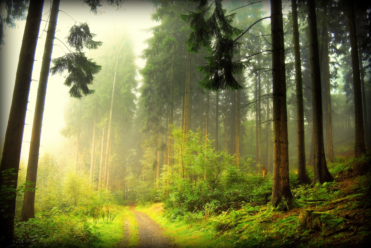 Красивый лес картинка в хорошем качестве