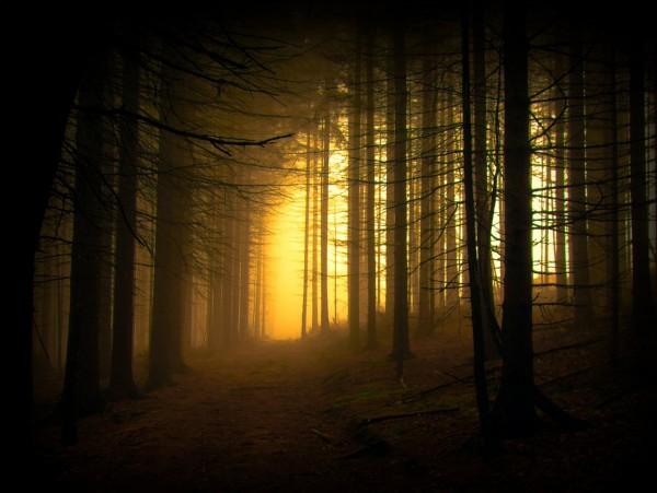 Красивые фотографии леса (19)