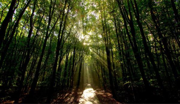 Красивые фотографии леса (17)