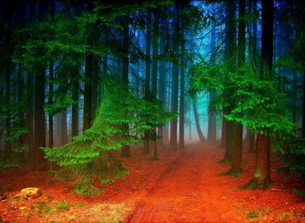 Красивые фотографии леса (16)