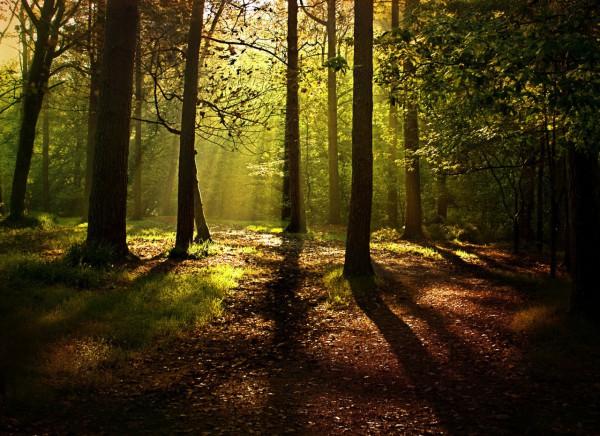 Красивые фотографии леса (15)