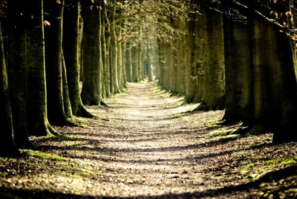 Красивые фотографии леса (14)