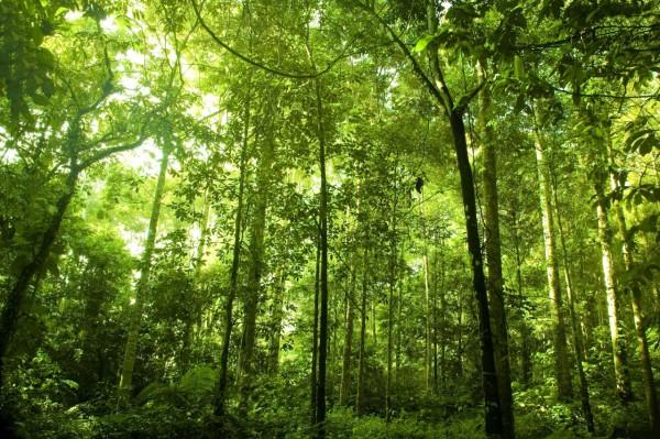 Красивые фотографии леса (13)