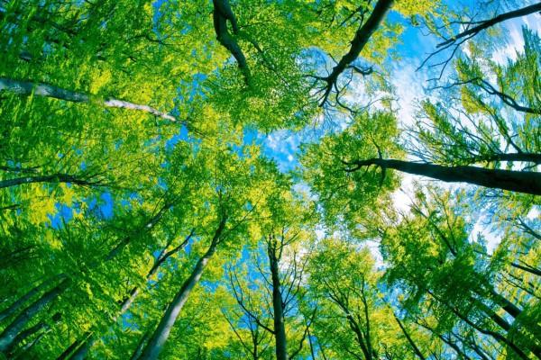 Красивые фотографии леса (12)