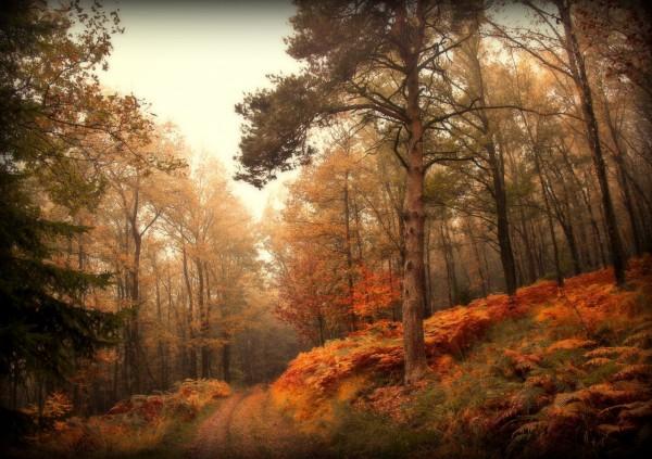 Красивые фотографии леса (28)