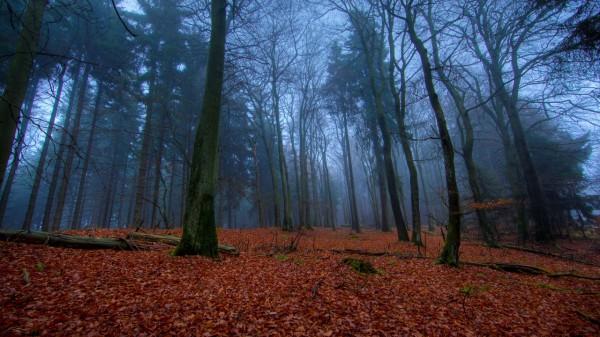 Красивые фотографии леса (11)
