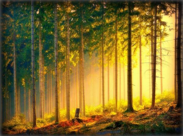 Красивые фотографии леса (1)
