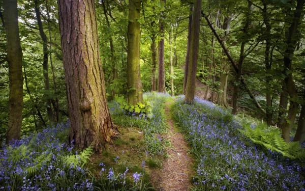 Красивые фотографии леса (10)