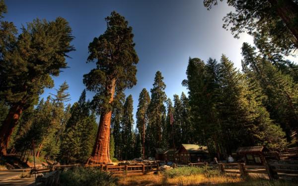 Красивые фотографии леса (9)