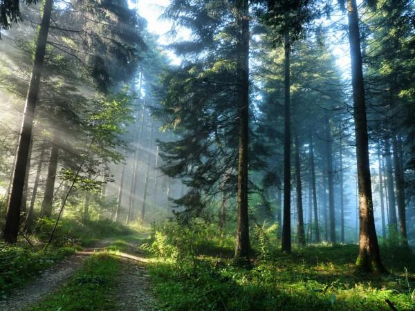 Красивые фотографии леса (8)