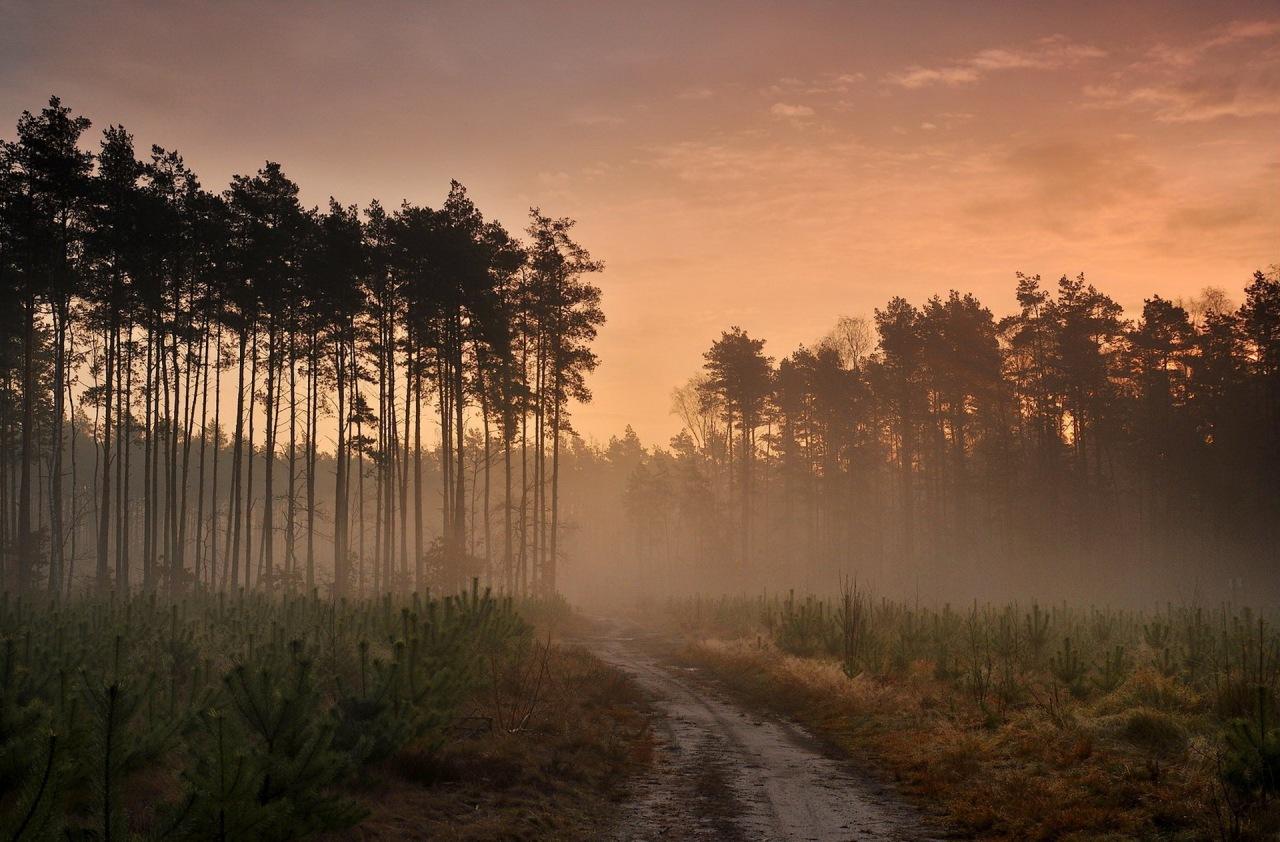 Закат в тумане в лесу  № 1140062  скачать