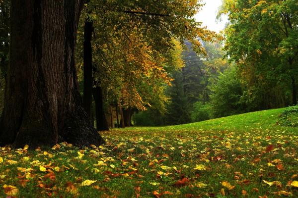 Красивые фотографии леса (6)