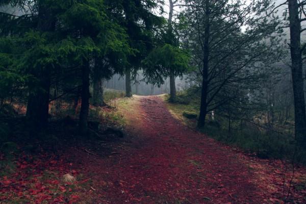Красивые фотографии леса (5)