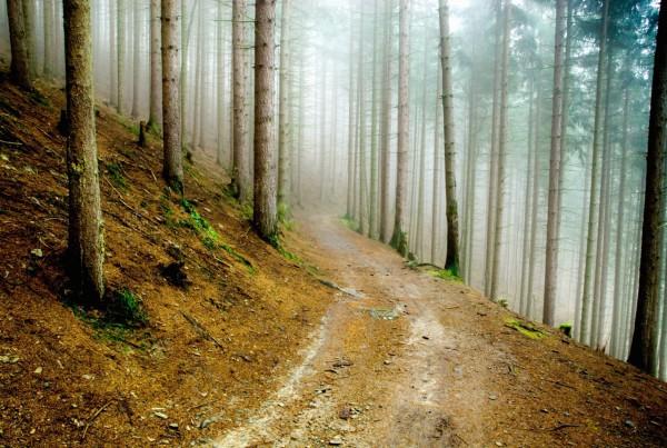 Красивые фотографии леса (4)
