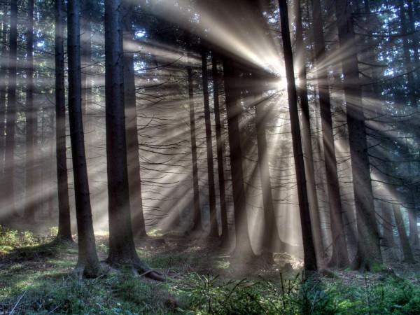 Красивые фотографии леса (3)