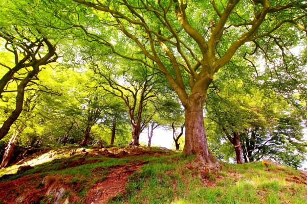 Красивые фотографии леса (2)