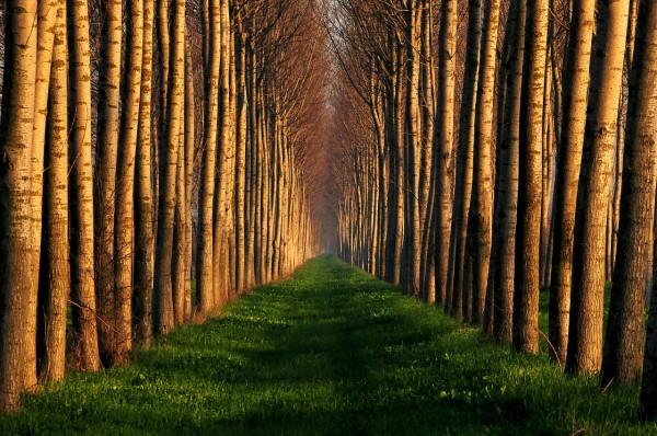 Красивые фотографии леса (23)