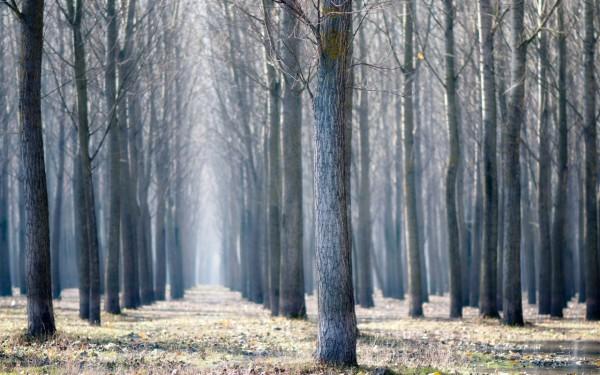 Красивые фотографии леса (22)