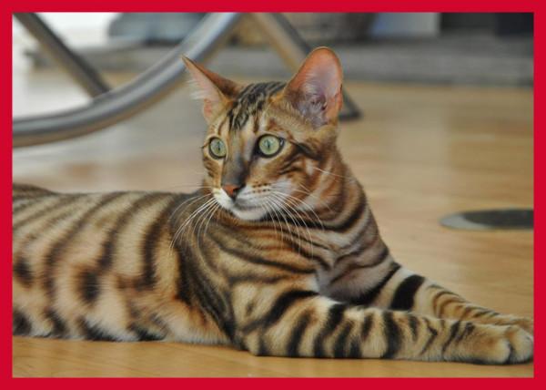 Домашние кошки Каталог домашних пород кошек с фото и