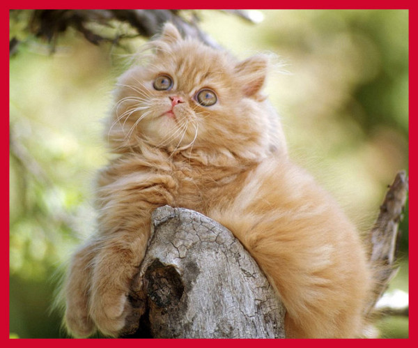 самые милые породы кошек (3)