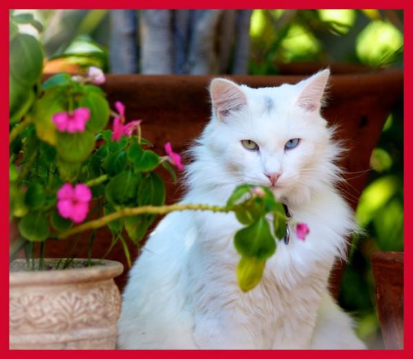 картинки милых кошек смотреть