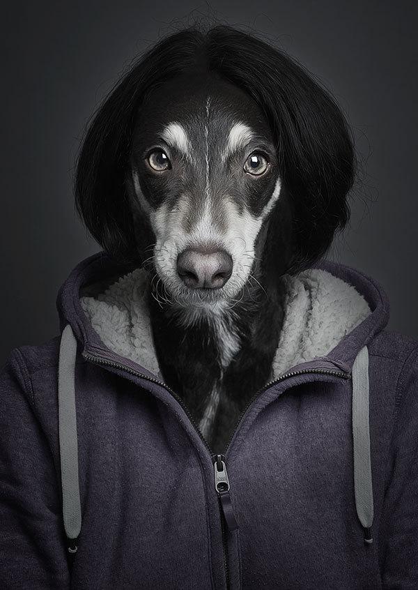 Картинки человек собака прикольные картинки, доброте