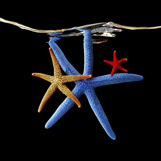 Mark laita серия подводный мир океана