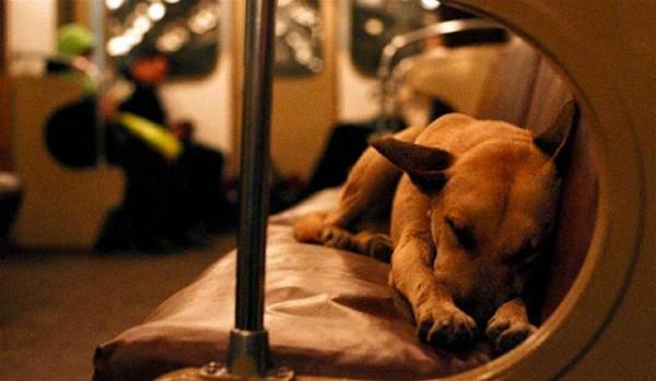 Resultado de imagem para Собаки в Московском метро