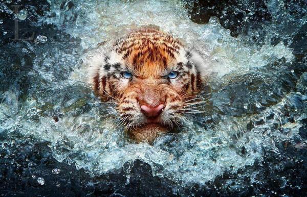 Фото дня: Милый тигренок.