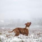 Фотографии собак из приюта. Фотограф Шеннон Джонстон