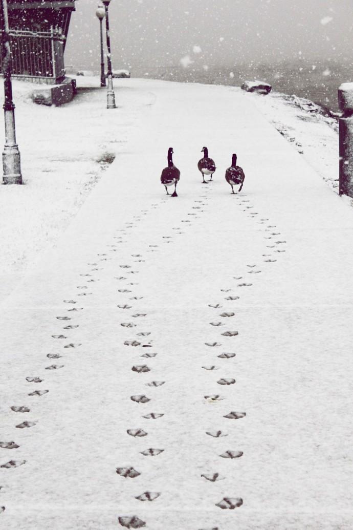 картинки смешные следы на снегу все фотовспышки