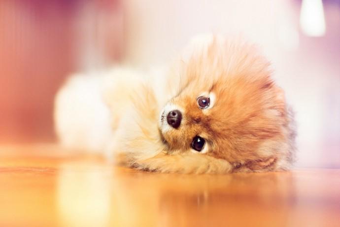 Милая собака флинт