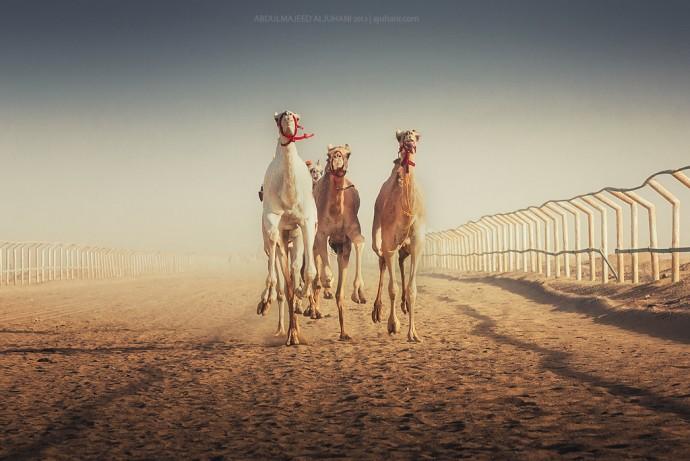 Детям о верблюдах