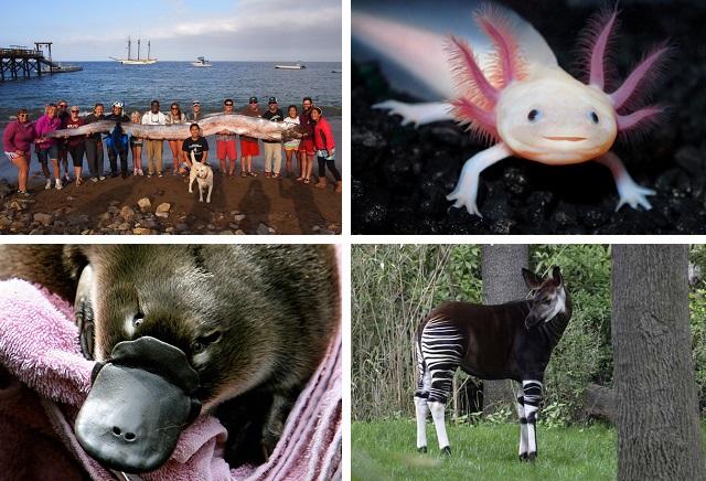Невероятные животные, которые действительно существуют