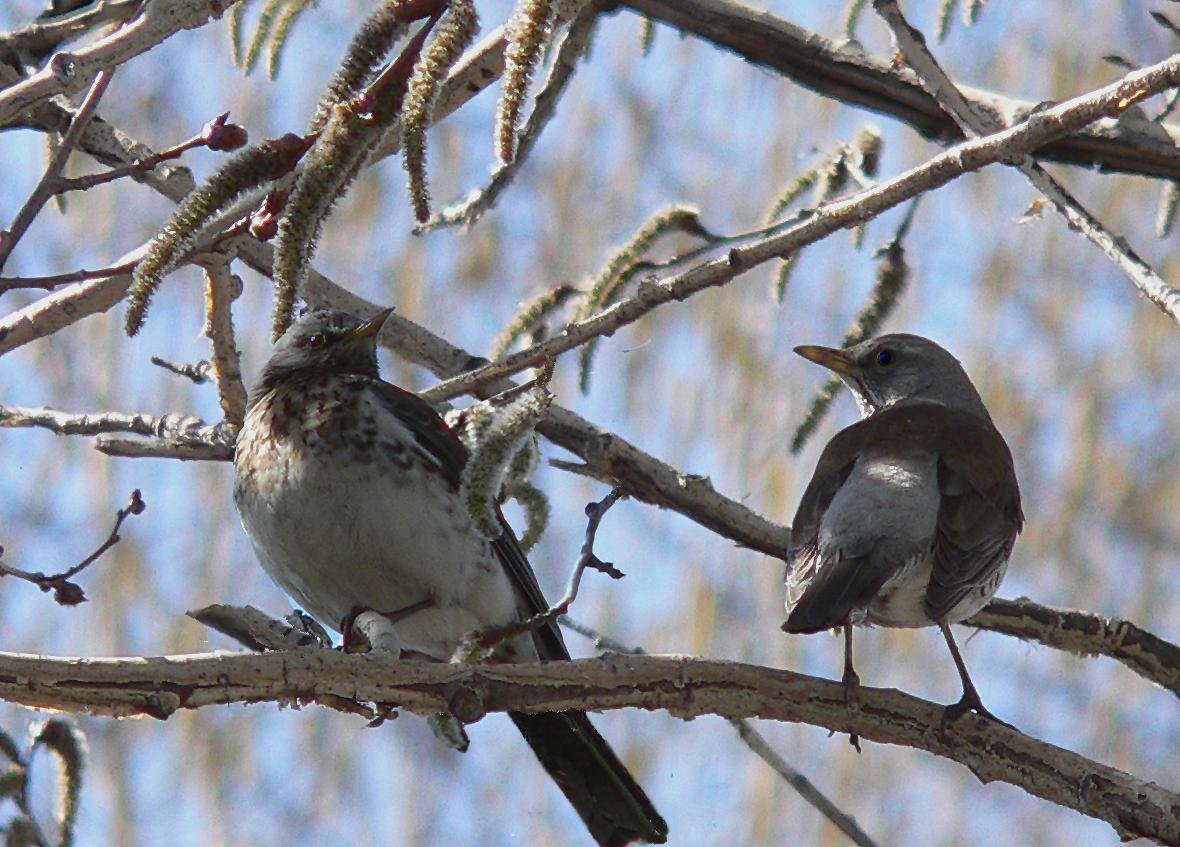 Встречаем птиц картинки