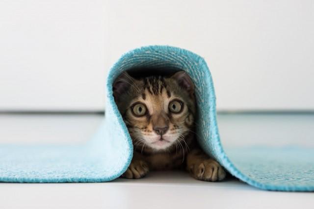 10 признаков кошачьей любви